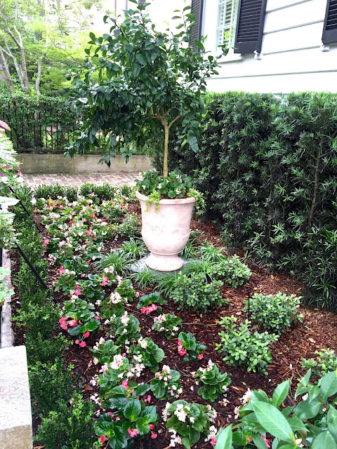 plantings for a no grass front yard no mow light sun small boxwoods english style