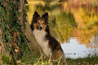 Kisah Seorang Anak Lelaki Budak dan Seekor Anjing