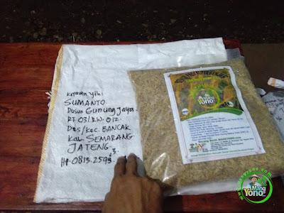 SUMANTO Semarang, Jateng  Padi CAKRABUANA 02 (CB02) 90 HST Panen  (Sebelum Packing)