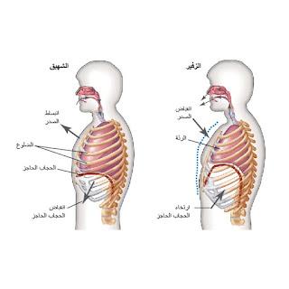 مكونات الجهاز التنفسي فى جسم الانسان