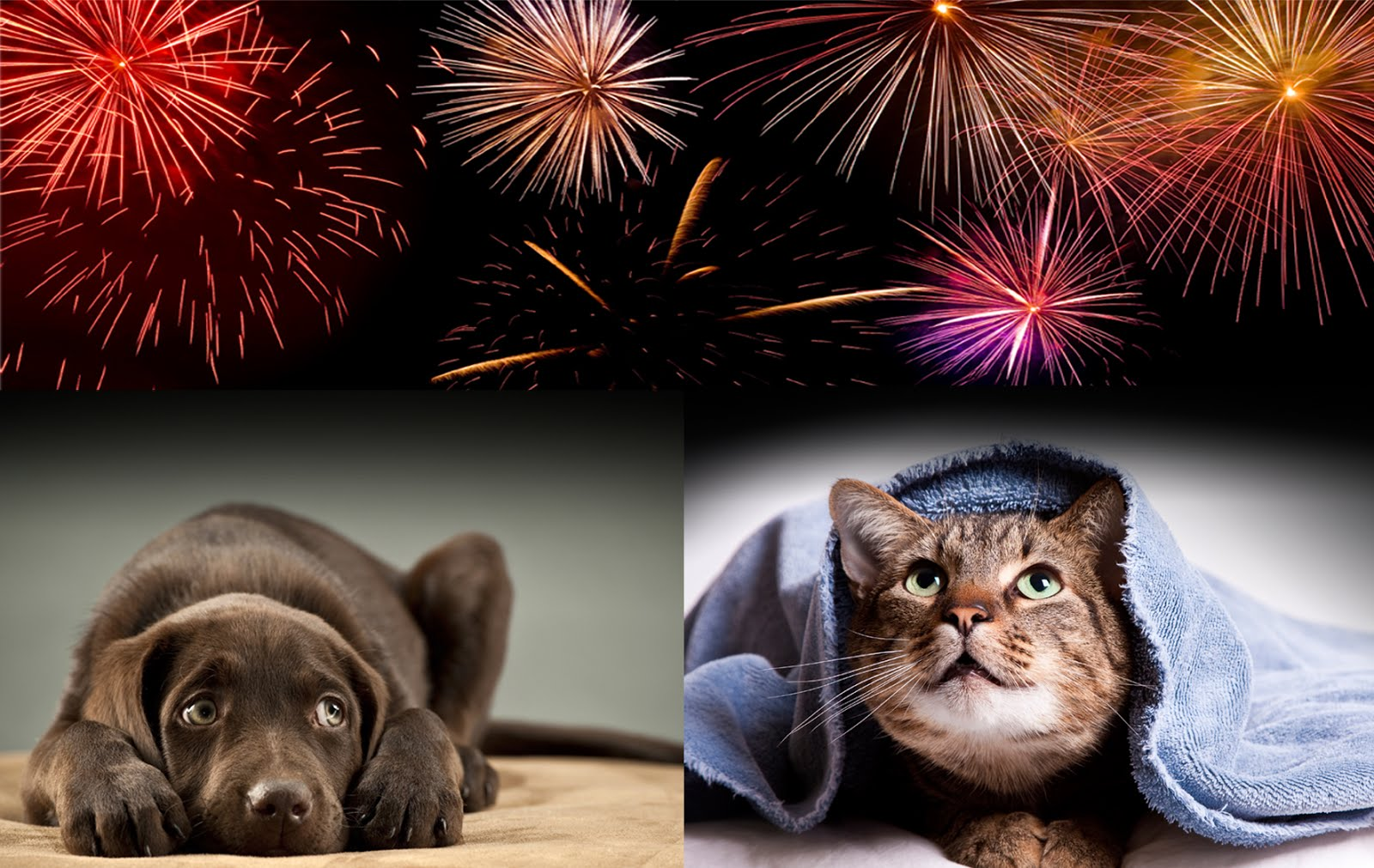 How to help your pet during the fireworks' season