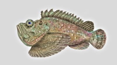 Dangerous Fish, Stonefish