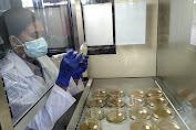 Jamin Mutu dan Kesehatan, Barantan Kelas I Manado Ambi Sampel Daging Olahan Ayam Yang Masuk Sulut