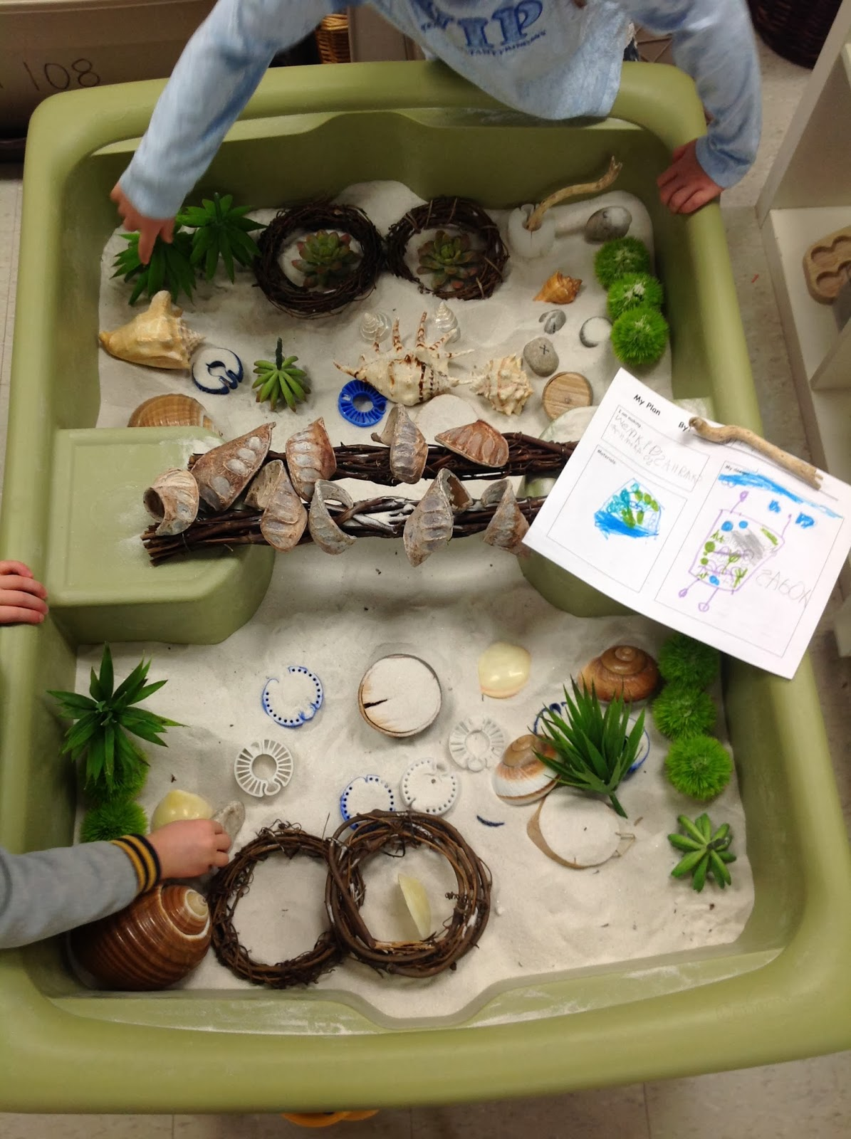 Wonders In Kindergarten One Of The Hermit Crabs Changed