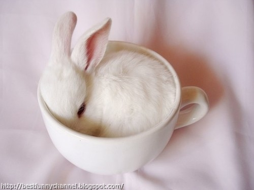 White bunny in a cup.