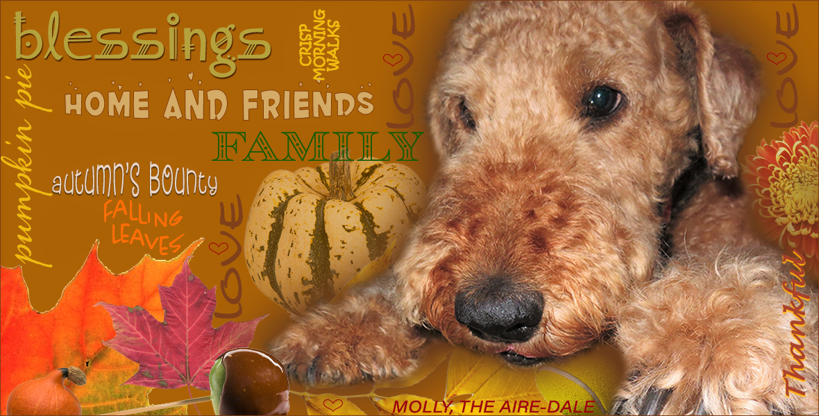 Molly the Airedale