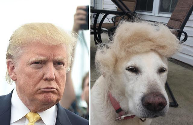 Donald Trump y un perro