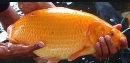 Cara Memilih Dan Menyimpan Ikan Laut Agar Tetap Segar