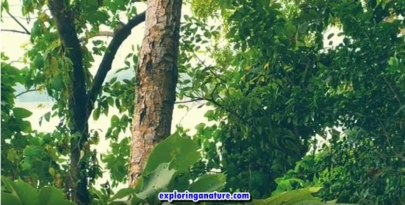 Biodiversity ecosystem of Umananda Island