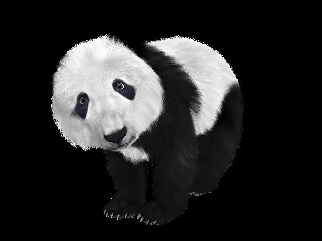 Panda in Hindi । पांडा दुनिया का सबसे खूबसूरत प्राणी