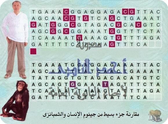 أحياء الثالث الثانوى - إستخدامات DNA المهجن - تحديد العلاقات التطورية بين الكائنات