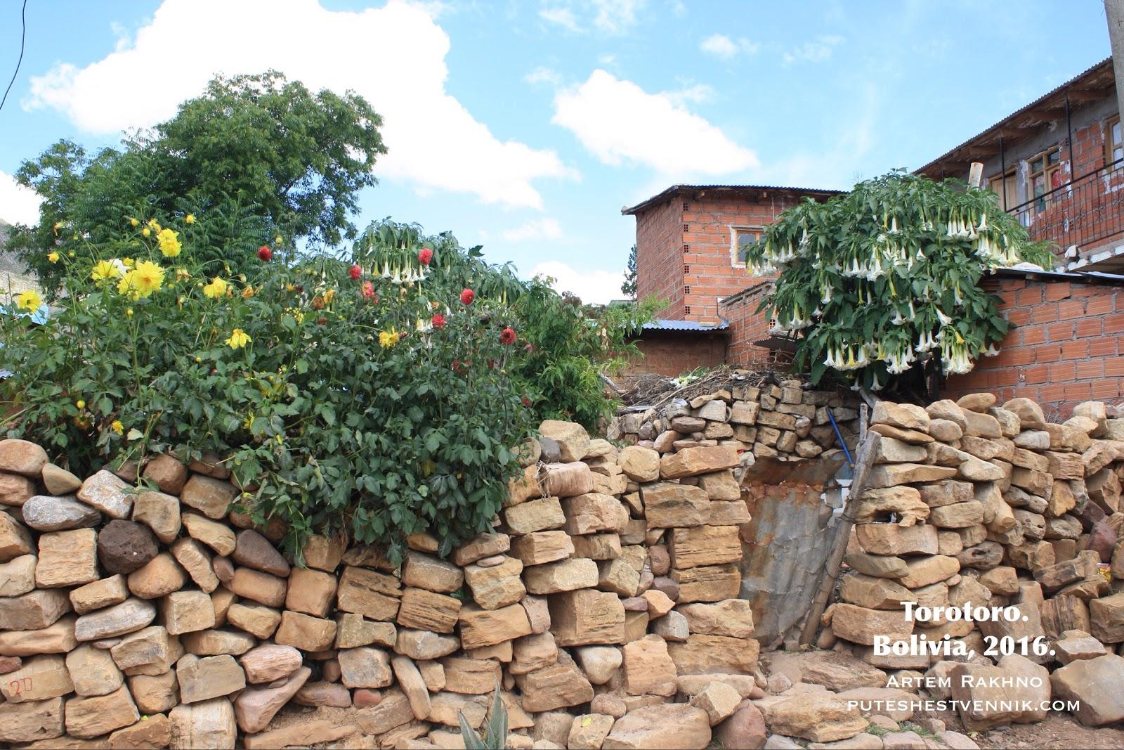 Цветы и забор из камней