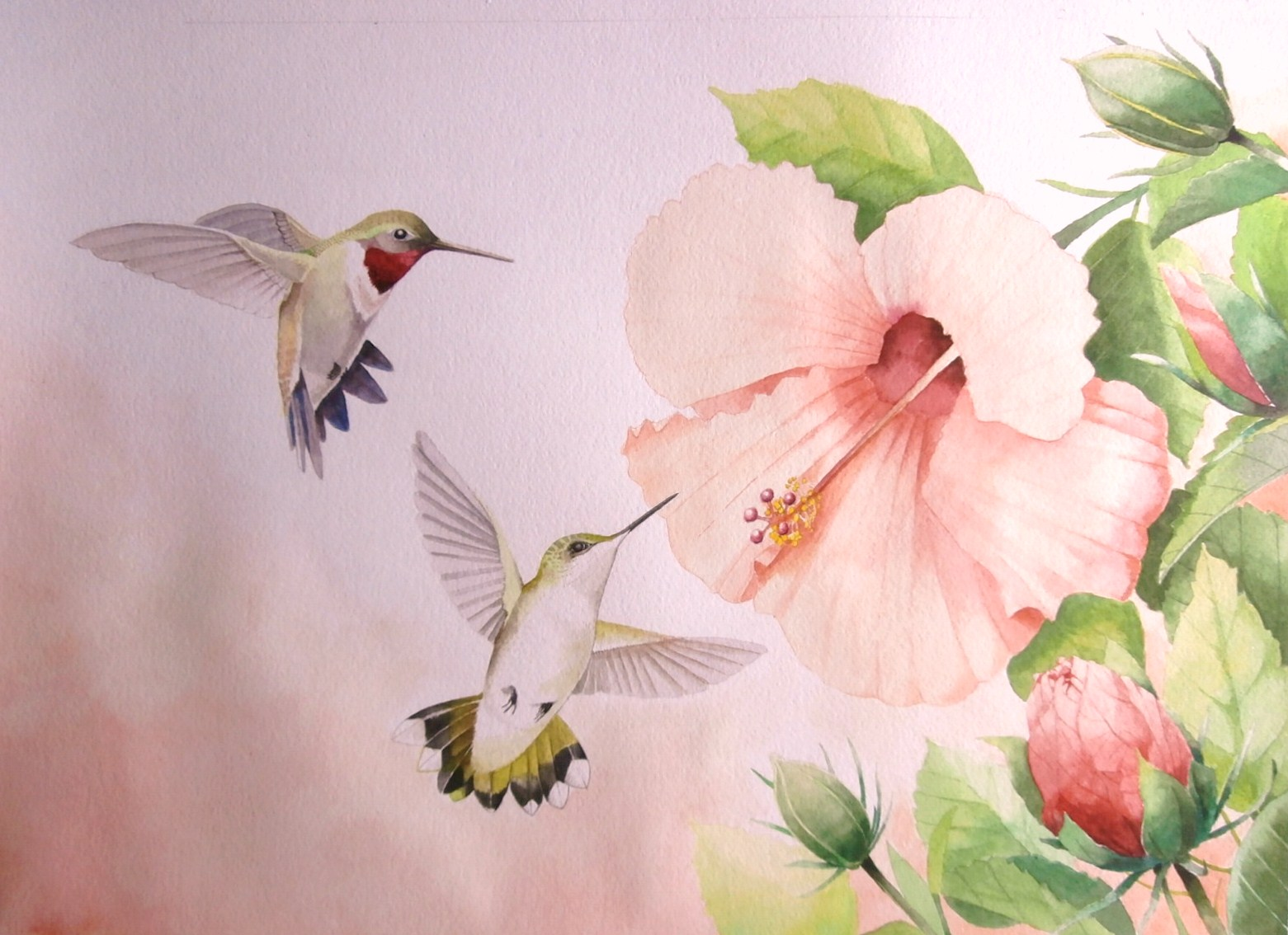 Tom Bose Watercolors Ruby Throated Hummingbirds And