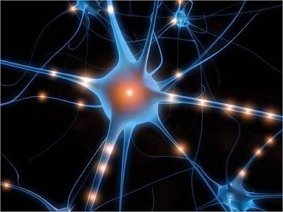 Fungsi Hormon TSH, ACTH, FSH, GH, ADH, LTH dan Oksitosin Lengkap dengan Penjelasan nya