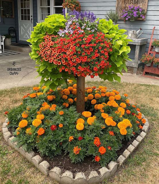 Foto de um pequeno jardim de lixo com plantas anuais de laranja
