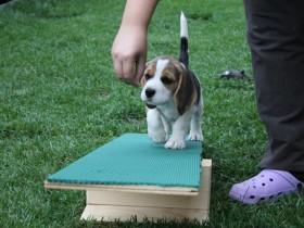 exercícios para filhotes de cães