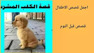 قصة الكلب المشرد