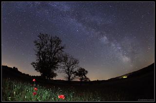 saffo primavera poesia- tamas ladanyi-la santa furiosa