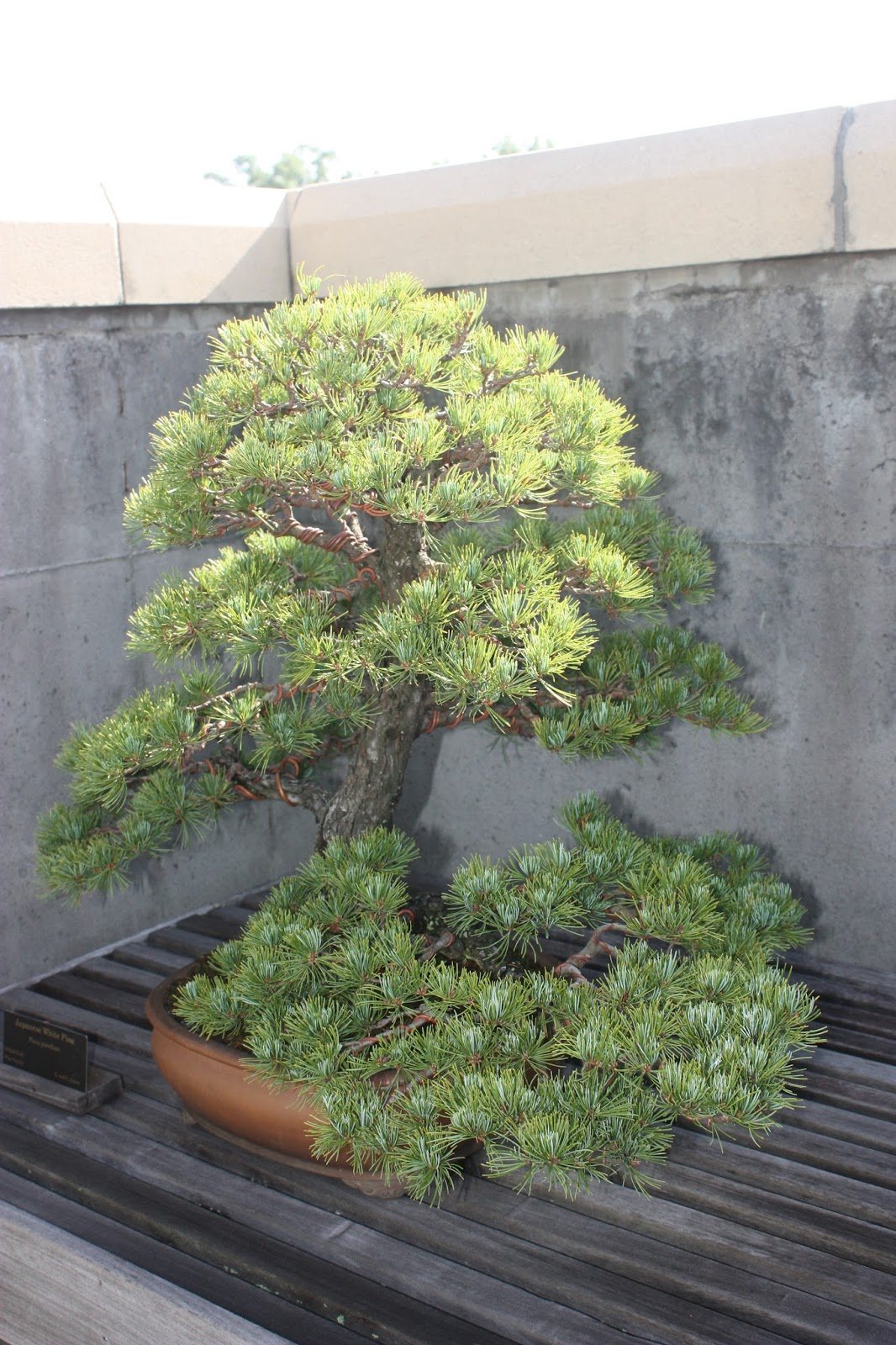 Garden Thyme With The Creative Gardener The Art Of Bonsai