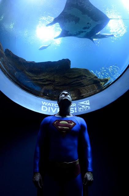 Dragon Con Night at Georgia Aquarium | Superman