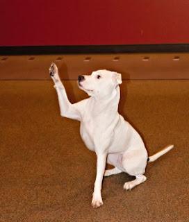 cão levantando a pata