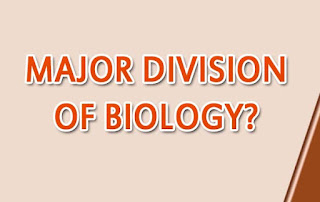 Define%2Bbiology%2Bwhat%2Bare%2Bthe%2Bmajor%2Bdivision%2Bof%2Bbiology