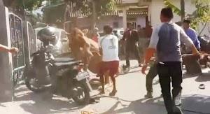 VIDEO: Sapi Kurban Ngamuk di Rumah Ketua Gerindra Kuningan, Jabar, 4 Motor Rusak