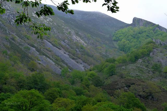 Hayedo en La Vallina Luiña - Piloña - Asturias