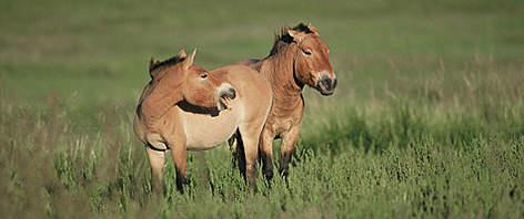 66 Fakta Mongolia Yang Menarik Untuk Menambah Wawasan