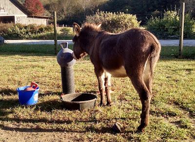 mini-donkey-toys-outside