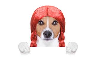 yol • sonbahar • köpekler • bak • yüz • ışık • doğa • poz • arka plan • köpek • yavru• kırmızı • arkadaşlık • çift • Trident • köpek yavrusu • kırmızı • bir çift • Labrador • Altın • İkili• arkadaşlar • şapka • şapka • cins • Av köpeği • oturma • iki köpek • yakışıklı • avrasya • iki yavru dil • köpekler • yaz • mutluluk • doğa • poz • arka plan • portre • dostluk • çift • bir çift• İkili • arkadaşlar • iki köpek • kenar kömür ocağı • Avustralyalı çoban • sarılmak • Avustralyalı