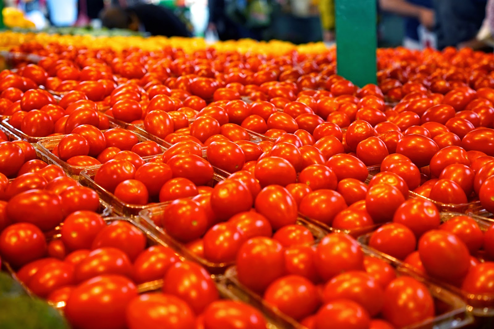 jean talon market tomatoes