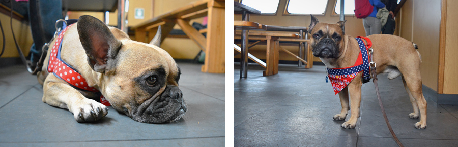Texel Urlaub mit Hund Bootsfahrt Garnelenfangen Schiff