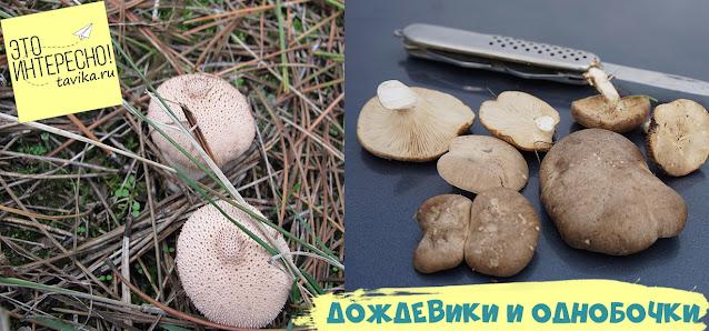 грибы в Крыму осенью