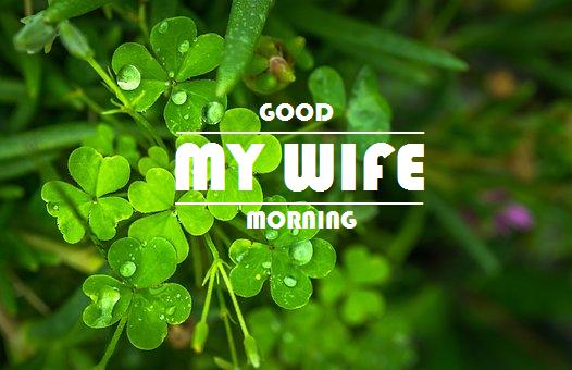 Rifkicerdas Com Ucapan Selamat Pagi Untuk Istri