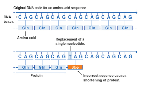 A nonsense mutation is also a change in one DNA base pair