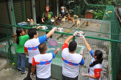 Chevron volunteers at animal shelter