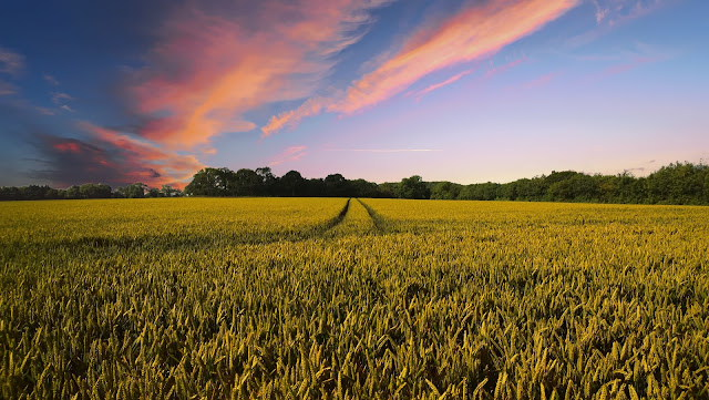 الإمارات العربية تطلق تطبيقا لخدمة الزراعة .. !!