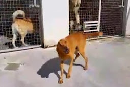 Dog Locked Up At A Shelter For 9 Years Suddenly Realizes He Has Been Adopted