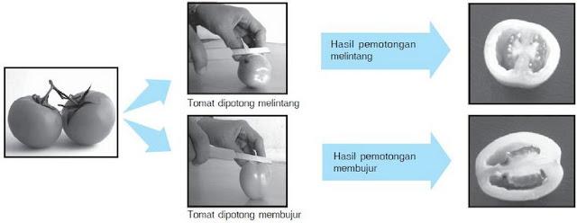 Cara membuat preparat irisan melintang dan membujur