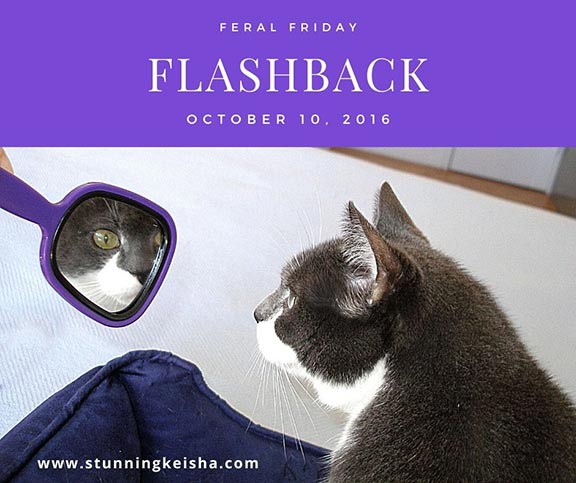 Reflections on Flashback Feral Friday