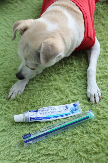 Virbac CET Enzymatic Toothpaste Review