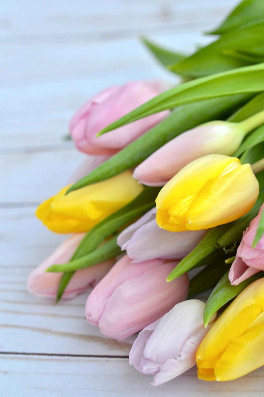 tulppaanit-hempeät-värit