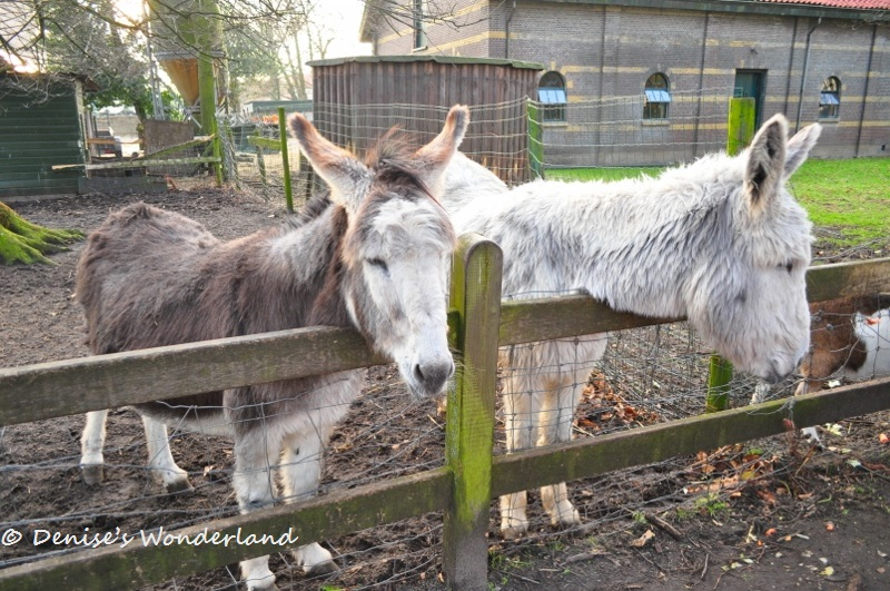 Little Farm Sanctuary at Clingendael Park