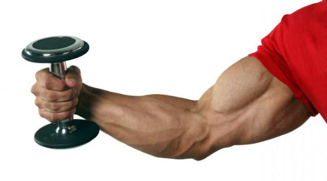 make big biceps