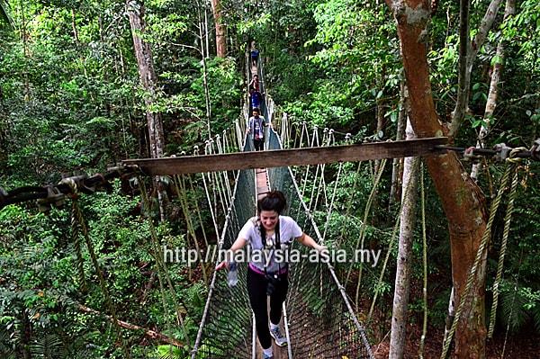 Treetop Walk Taman Negara