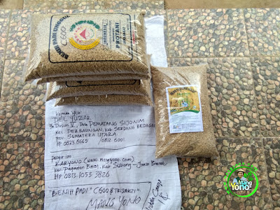 Benih pesana    DEL YUZAR Serdang Bedagai, Sumut   (Sebelum Packing)