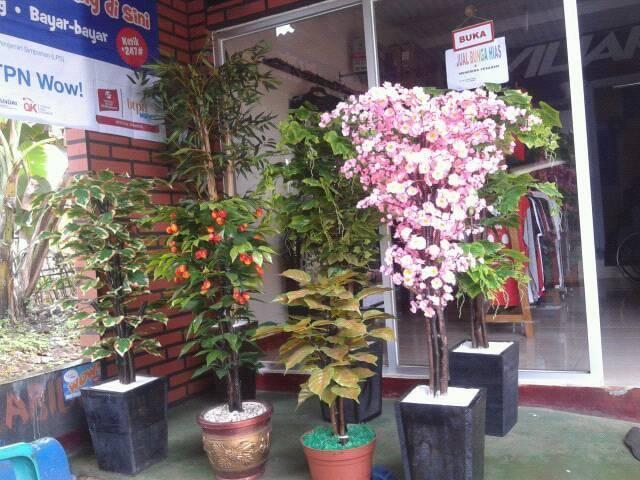 Tanaman-bonsay-hias-nan-indah_0109.jpg