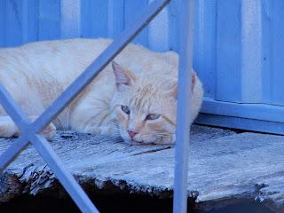 ポンペイで見つけた猫の接写