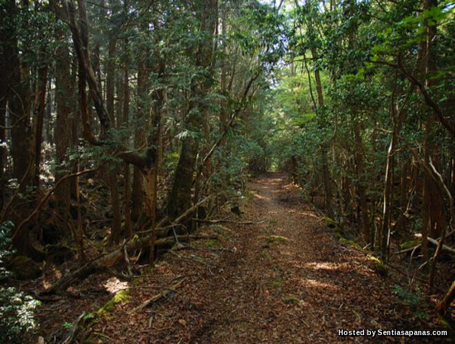 Hutan Aokigahara Tempat Paling Berhantu Di Jepun!